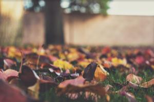 feuilles-mortes-automne